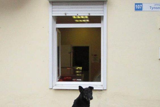 Дождется ли пёс приза?