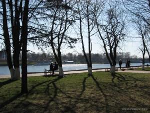деревья в парке