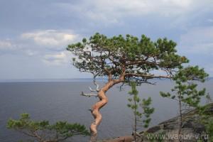 Растительность острова своеобразна