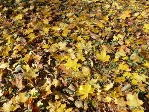 Осенний ковер