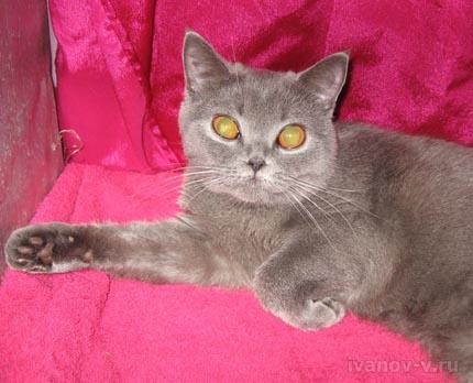 кошка и глаза