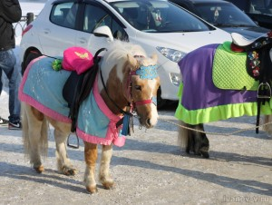 Фото «Половина лошадиной силы»