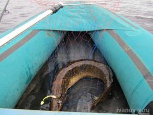 щука уже в лодке