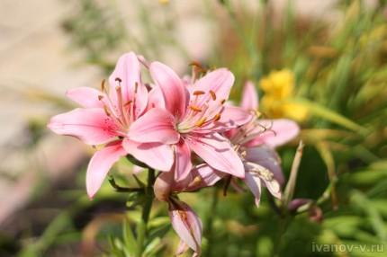 цветы на солнце днем