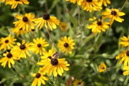 цветы и бабочки в Ю-Питере