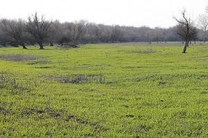 трава быстро растет
