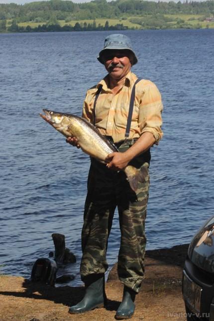 Трофейный судак 4,3 кг