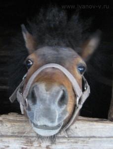 Взгляд пони