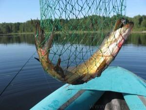 заводишь рыбу в подсачек и поднимаешь её в лодку