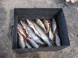 рыбу укладываем на решетках коптилки