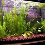Где установить аквариум