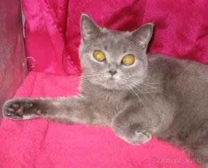 глаза у кошек