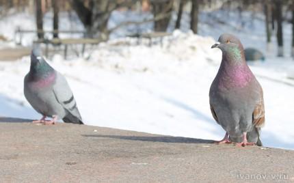 весна и голубки