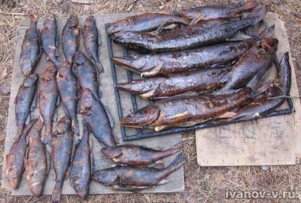 копченая рыба с рыбалки на Волго