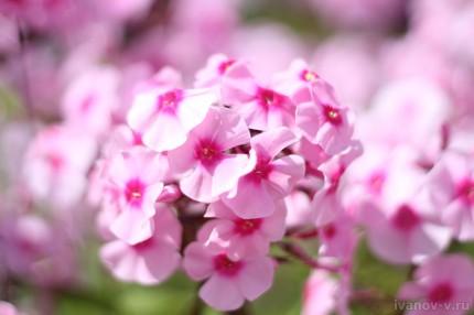 цветы утром на солнце