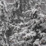 Снова первый снег