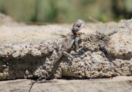 Фотоохота на ящериц в Турции