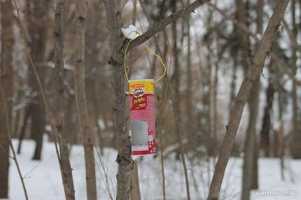 кормушка для птиц из тубы Принглс