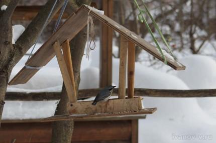 птица нашла кормушку