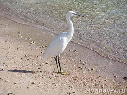 птица на берегу моря