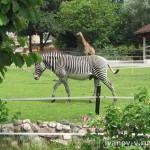 Поездка в Московский зоопарк