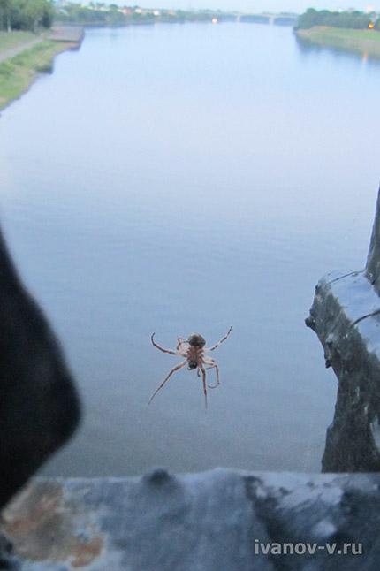 паук - экстремал