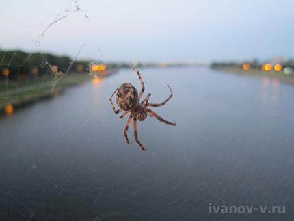 паук на мосту