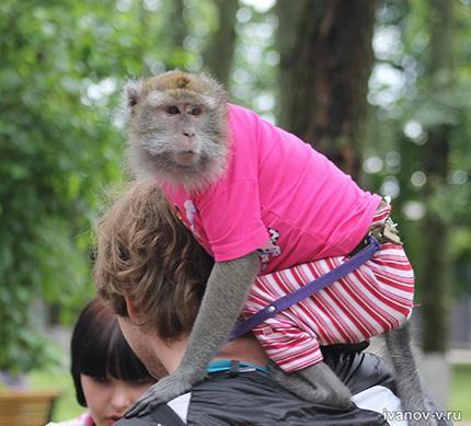 обезьянка